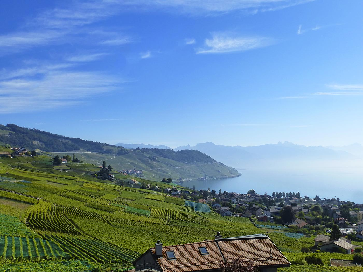 Vineyards view of Lavaux and Geneva's Lake